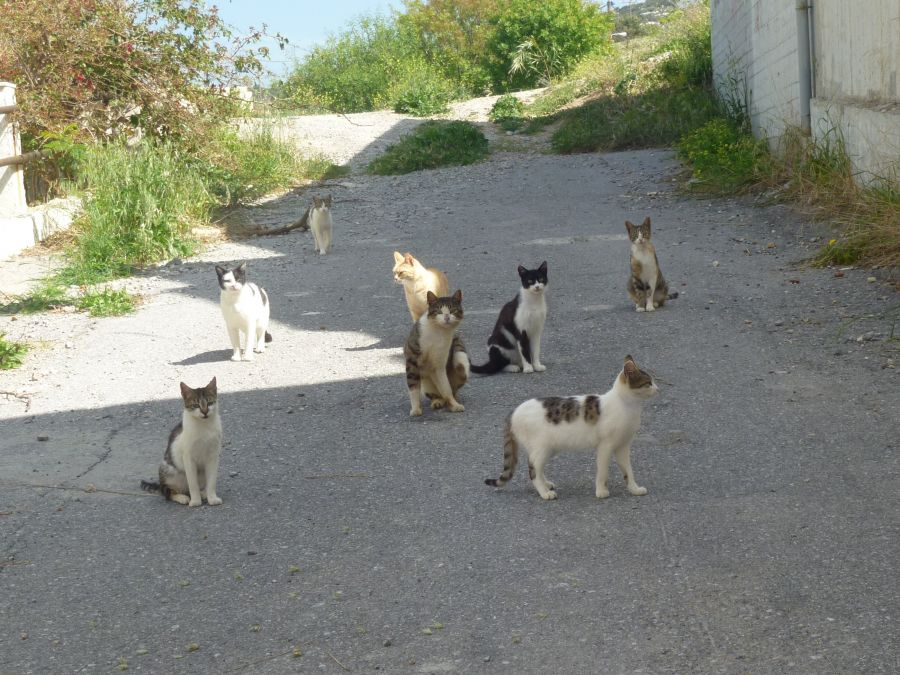 GCWS - Stray cat neutering programme